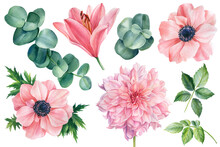 Set Of Flowers Of Pink Anemone...