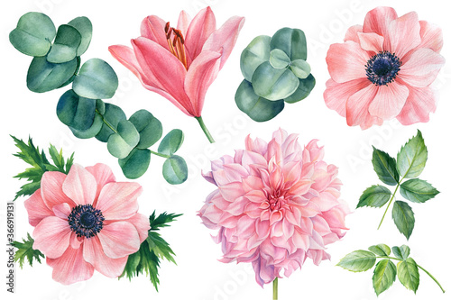 Photo Set of flowers of pink anemones, lily, dahlia and eucalyptus leaves on an isolat