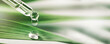 Leinwandbild Motiv essentail oil drop from dropper on green leaf. beauty, wellness and body care. banner