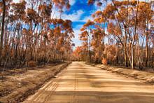 Rural Farm Road Winding Betwee...