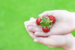 Leinwandbild Motiv image of hand wild strawberry