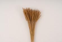 Closeup Gramineae Grass (Setar...