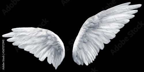 Fotografering wings