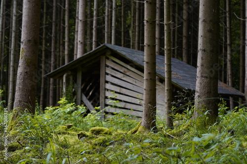 Hütte im finsteren Wald Wallpaper Mural