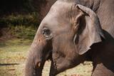 Słoń z Chiang Mai