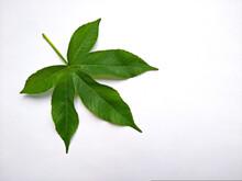 Isolated Beautiful Green Leaf ...