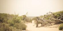 Wild Beach And Nature