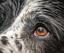 Close Up Of A Dog Eyes