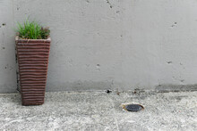 Grass Plant In Tall Pot Against Featureless Cement Wall With Drain Hole