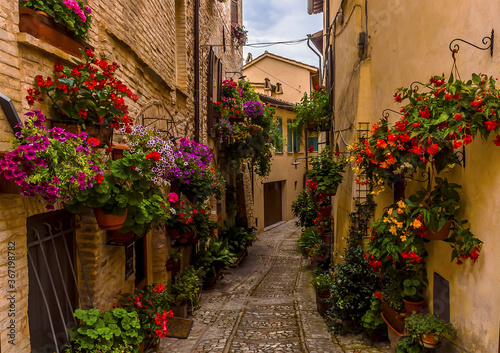 Fototapety, obrazy: Vibrant flowers adorn a narrow alleyway in the hilltop village of Spello, Umbria in the summertime