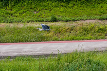 Grey Heron Flying Over Road.