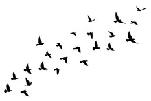 Flying Birds Silhouettes On Wh...