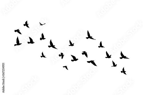 Fotografija Flying birds silhouettes on white background