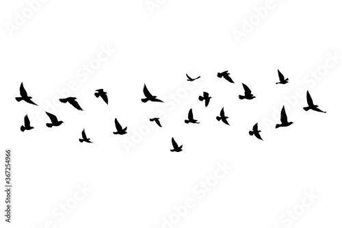 Flying birds silhouettes on white background Fototapeta