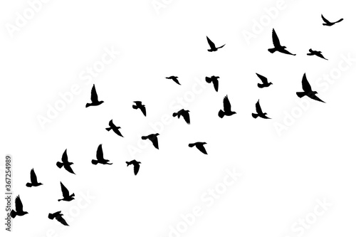 Photographie Flying birds silhouettes on white background