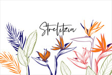 Beautiful Strelitzia, Tropical Flowers, Green Banana Leaf, Palm Bouquet Card Composition. Tropic Outline Floral Illustrations. Tropical Collection. Line Sketch In Watercolor Style.