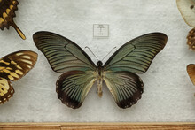 Beautiful Papilio Zalmoxis Butterfly On White Background
