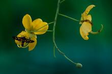 Yellow Flower On A Green Backg...
