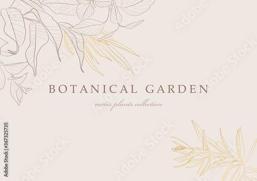 Fotografie, Obraz Botanical garden. Vector collection of hand drawn plant elements