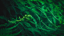 Close-up Of Dark Green Fern Le...