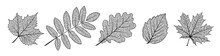 Set Of Vector Texture Leaves. ...