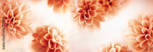 Foto Autumn floral composition made of fresh dahlia on light pastel background