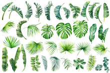 Tropical Palm Leaves Set On Wh...