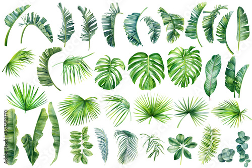 Tropical palm leaves set on white background. Watercolor hand-painted, summer clipart