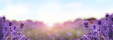 Beautiful sunlit lavender field, closeup. Banner design