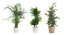 Set Of Different Houseplants In Flower Pots On White Background. Banner Design