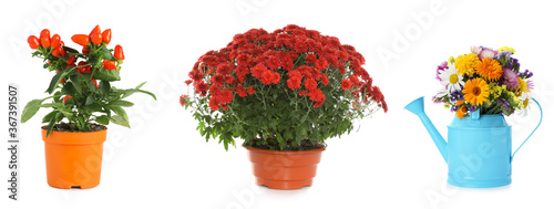 Set of different blooming plants in flower pots on white background, banner desi Wallpaper Mural