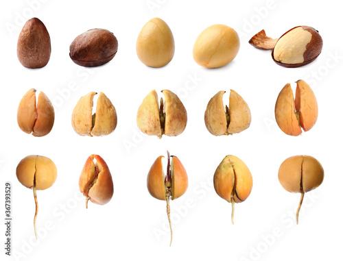 Obraz Process of avocado growing on white background - fototapety do salonu