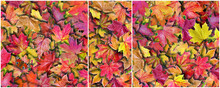 Autumn Background. Colorful Br...