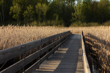 Wooden Boardwalk Through A Canadian Bog. There Are A Lot Of Shadows Casted By The Hard Sun Light.