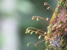 Mosses In The Bark Of The Tree