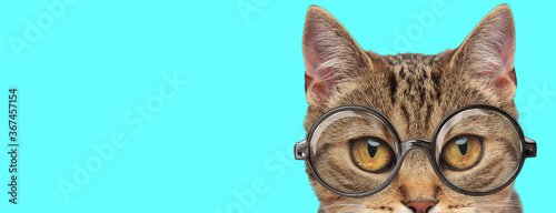 Obraz cute metis cat with eyeglasses and half of face exposed - fototapety do salonu