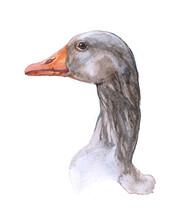 Watercolor Single Goose Isolat...