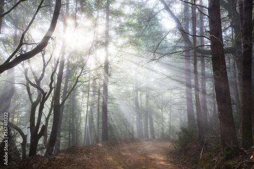 Fototapeta Sunny beams obraz
