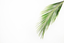 Big Green Palm Leaf Over Bright Background. Freshness Concept.
