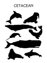 Whales And Seals Silhouette Ve...