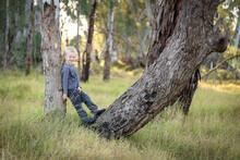 Happy Little Boy Climbing Large Tree Trunk In Australian Bushland