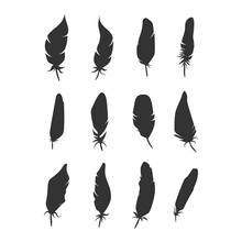 Bird Feathers Black Silhouette...