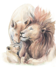 Lion Family. Family Of Lions, ...