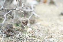 Dry Bush With Thorns, Desert L...