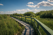 Calowanie Swamp - Wooden Footbridge On The Peatbog In The Masovian Landscape Park, Karczew, Poland