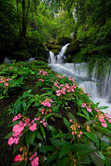 Fototapeta Ogrody Beautiful flower (Habenaria orchid) and waterfall in deep forest at Phu Hin Rong Kla National Park, Thailand.