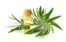 Melaleuca (Tee Tree) Essential Oil Isolated On White Background.