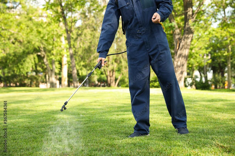 Fototapeta Worker spraying pesticide onto green lawn outdoors, closeup. Pest control