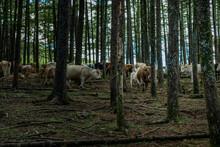 Caballos Y Vacas Por Montes De...