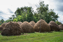 Several Haystacks On A Background Of Trees And Summer Sky.